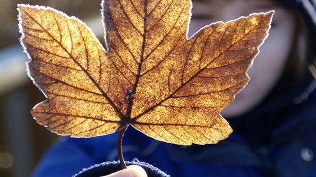 Мастер-класс: Осеннее домино. Делаем вместе с ребенком