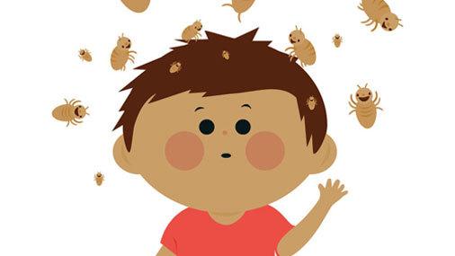 8 мифов о вшах и педикулезе