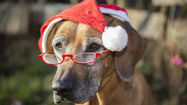 Гороскоп 2018: Желтая Собака следит за порядком