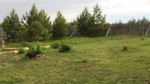 Весенние работы на даче: обработка кустарников