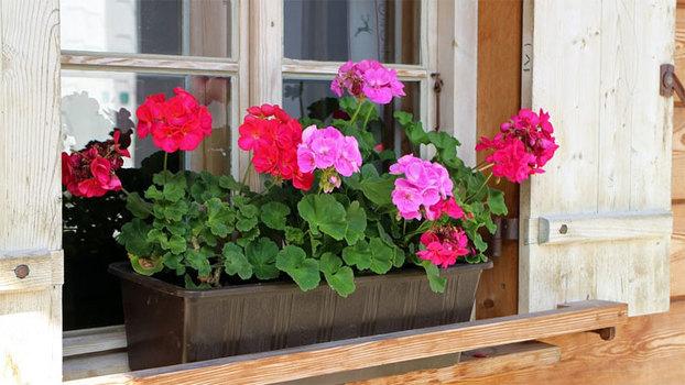 7 опасных комнатных растений для детей и взрослых