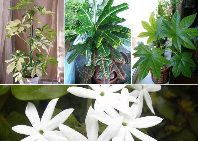 Цветы для северного окна фото
