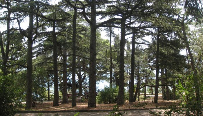 Рукотворный лес ЮБК - место для лечебных ингаляций