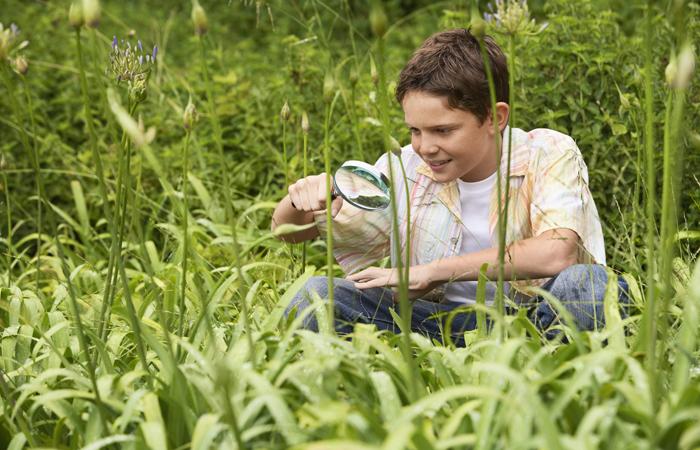 Что такое фунгициды для растений