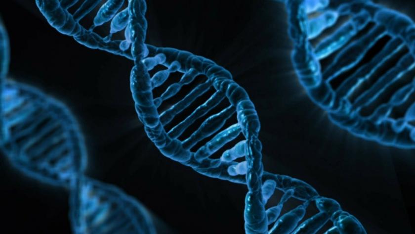ВПЧ (вирус папилломы человека). Что это и чем опасен?