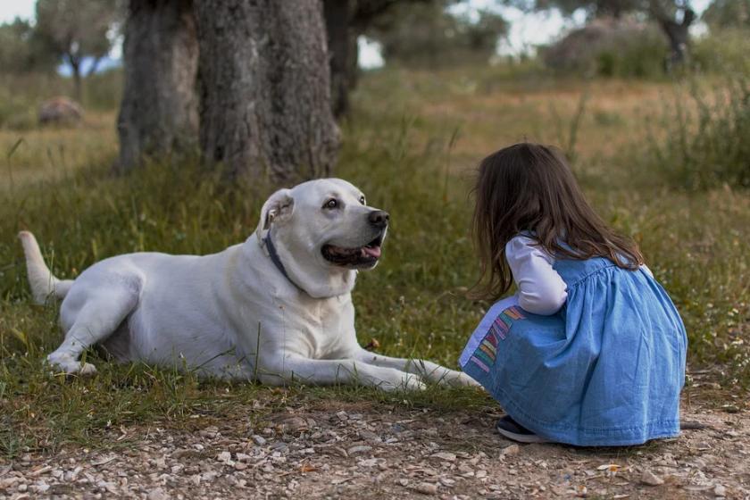 5 правил поведения с собаками, которым нужно обучить детей