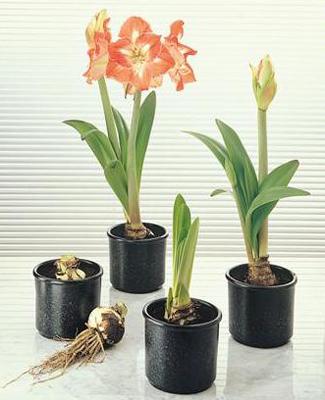 (активного роста растения)