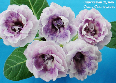Вязание крючком схемы цветы: vizanie kruchkom.