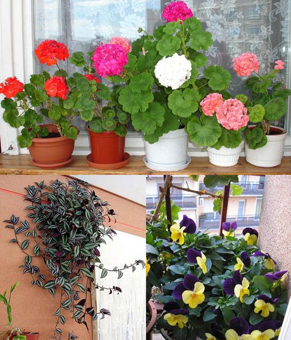 Далеко ходить не будем. украсим цветами собственный балкон!.